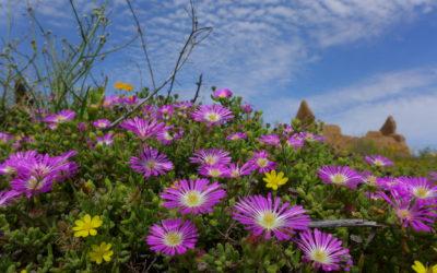 Namaqualand: Blühendes Paradies